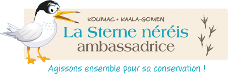 Logo réalisé pour le projet Sterne néréis © Projet Sterne néréis / Province Nord