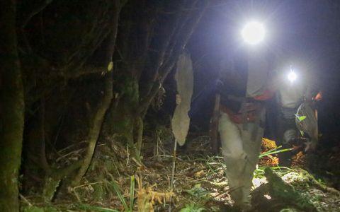 De nombreuses espèces d'insectes étant essentiellement nocturnes, les « chasses » se font également en pleine nuit, à la lueur de la lampe frontale