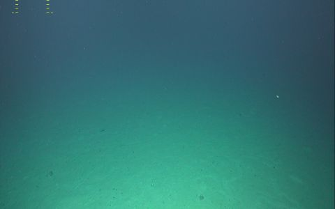 plaine sédimentaire par 2860 m de fond
