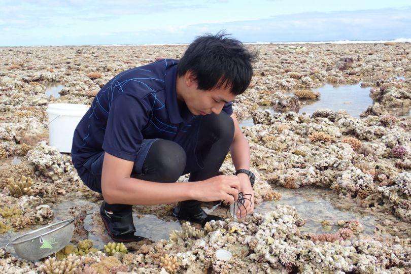 Fig10. Prélèvement de mollusques parasites sur le Grand Récif de Koumac © Yasunori Kano / MNHN