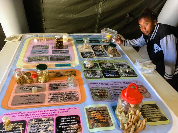 Etude des caractères des organismes pour les positionner sur une classification © Carole Bernard / MNHN