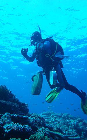 plongeur © Marina Poddubetskaïa / MNHN