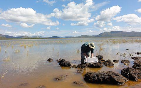 Echantillonnage au bord du Grand Lac de la Plaine des lacs © Martin Haase / MNHN