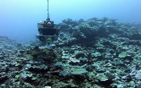 Flipper corail © Laurent Charles / MNHN / CNRS / Univ Montpellier