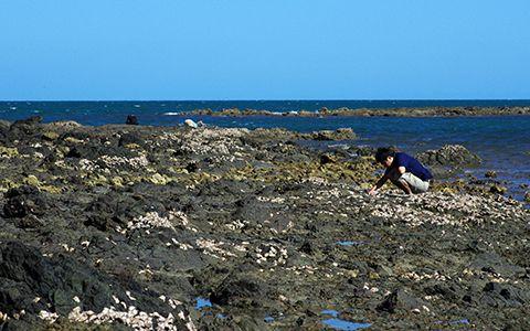 Exploration du littoral à pied © Laurent Charles / MNHN