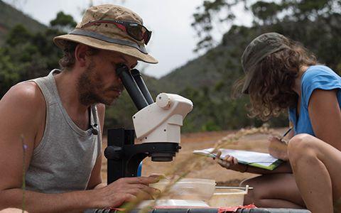 Observation d'organismes à la loupe binoculaire © Cyndie Dupoux / MNHN