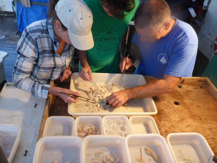 Les organismes récoltés sont triés puis fixés afin de pouvoir être étudiés au retour de la mission par des spécialistes de chaque groupe zoologique