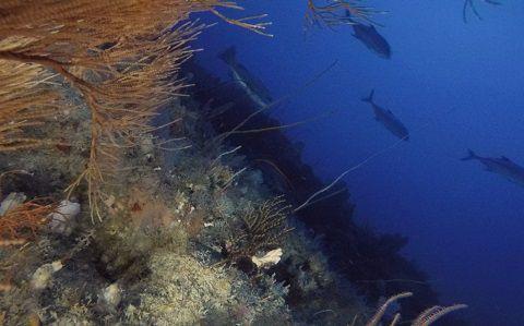 Des poissons curieux par 87 mètres de profondeur © Vincent Creuze / MNHN / CNRS / Univ Montpellier