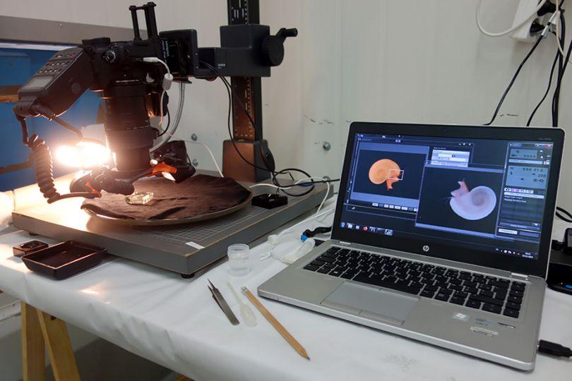 Installation pour la photographie des micromollusques